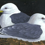 Art MacKay, Kittiwakes Nesting