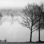 Deborah Upton-Savedoff, River Trees