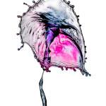 John Draper, Water Umbrella