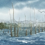 Morag Walsh, Whale Cove Weir